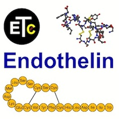 The International Conferences on Endothelin
